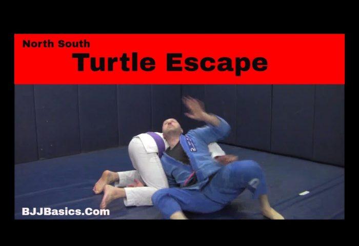 North South Turtle Escape